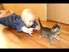 COME HERE LITTLE KITTEN I NEED FOOD