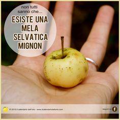 Esiste una mela selvatica Mignon