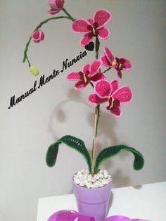 Le mie orchidee ...sono per sempre