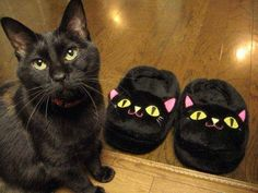 """icanspeaktocats:  """"Is this supposed to be me??"""""""