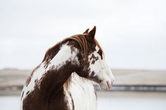 All the pretty horses All The Pretty Horses, Beautiful Horses, Animals Beautiful, Cute Animals, Horse Pictures, Animal Pictures, Horse Photography, Nature Photography, Horse Love