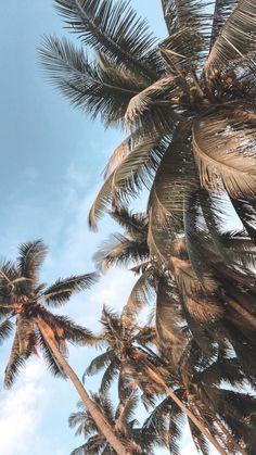 Strand Wallpaper, Palm Wallpaper, Summer Wallpaper, Iphone Background Wallpaper, Retro Wallpaper, Nature Wallpaper, Tropical Wallpaper, Wallpaper Samsung, Wallpaper Wallpapers