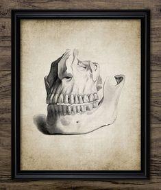 Human Teeth Print Human Dental Anatomy by InstantGraphics Teeth Drawing, Dental Office Design, Design Offices, Modern Offices, Healthcare Design, Dental Anatomy, Human Teeth, Dental Art, Illustration