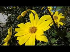 Transition into the new season March, Seasons, Make It Yourself, Garden, Plants, Garten, Seasons Of The Year, Lawn And Garden, Gardens