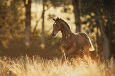 Beautiful brown horse pictures #horses#horse#horselovers#horselove#lovinghorses#beautifulhorsepictures#horseriding#stunninghorses#beautifulhorses#loveforhorses#stallions#polopony#pony#whitehorses#equestrian#marwarihorse#marwari#thoroughbred#ponies#horsepictures#horsephotography#horsebackriding#LAPOLO Polo Horse, Beautiful Horse Pictures, Pebble Beach Concours, Brown Horse, Horse Training, Horse Breeds, Horse Photography, Classic Elegance, Thoroughbred