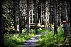 Photo listed in Nature 17 shares, 29 likes and 661 views. Places To Travel, Lute, Landscapes, Woodland Forest, Destinations, Holiday Destinations, Travel Destinations
