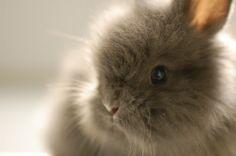 Want: esp. a lionhead bunny