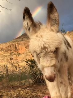 What a beautiful photo  Adorable LIESAL is just a little over 2 months from Utah. Thank you, Amy McCool, for posting.  Enjoying the rainbow.