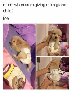 In this post, we have compiled a hilarious list of all the memes millennials are sharing to show they prefer animal babies to human ones because they think pets are just more enjoyable and less of a responsibility than kids. We bet these memes will make y Funny Animal Memes, Cute Funny Animals, Dog Memes, Funny Animal Pictures, Cute Baby Animals, Funny Dogs, Funny Memes, Dog Pictures, Meme Gifs