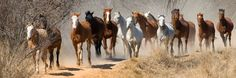 Horizon Horseback Adventures and Safaris: Horse riding holidays and horseback safaris in South Africa