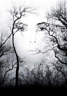 Enigme visuelle sur Enigmatum! Que voyez-vous? Un visage ou des arbres?