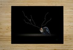 Cerebration HD Metal print with Floating Frame on Back Sogetsu Ikebana, Blurb Book, Traditional Wallpaper, Black Sea, Floating Frame, Book Gifts, Adhesive Vinyl, Photo Book, Wall Murals