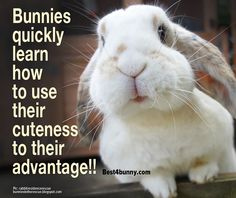 Beware of that look! www.best4bunny.com