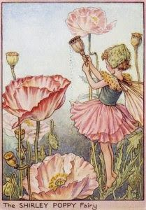The Shirley Poppy Fairy. Vintage flower fairy art by Cicely Mary Barker. Taken from 'Flower Fairies of the Garden'. Click through to the link to see the accompanying poem. Cicely Mary Barker, Elfen Fantasy, Fantasy Art, Flower Fairies, Fairies Garden, Flowers Garden, Fairy Pictures, Vintage Fairies, Fantasy Illustration