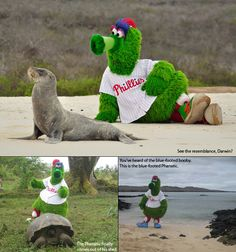 The Phanatic is home where he belongs