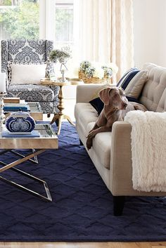 Pier 1 has plenty of ways to refresh your living room, from hand-painted blue and white porcelain to our hand-upholstered Nyle Sofa. We've given our Alec Wing Chair an update with a new indigo upholstery. And we have a hand-tufted wool rug in deep indigo that you can sink your toes into. Plus, it helps if your dog matches.