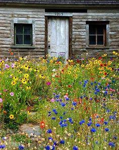 Meadow Garden, Garden Cottage, Meadow Flowers, Wild Flowers, Wild Flower Gardens, Summer Flowers, Cut Flowers, Front Yard Design, Beautiful Flowers Garden