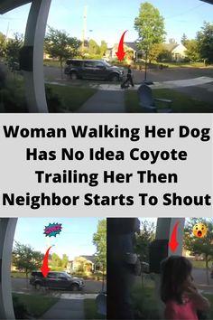 #women #walking #dog #coyote #trailing #idea #neighbour #shout #omg Daily Life Hacks, Diy Pins, Awesome, Amazing, Diy Crafts, Animals, Inspiration, Food, Biblical Inspiration