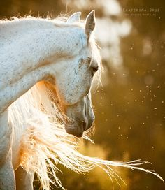 great horse photo