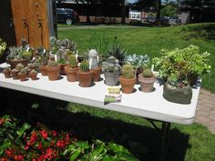 Ellington Farmers Market.  Kathy Hemingway of Lori Spielman Landscaping will be bringing her healthy and robust cacti and succulents to the market this week. Kathy is a wealth of knowledge in the care and keeping of these lovely plants. Stop by and chat!  http://ellingtonfarmersmarket.com/