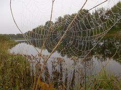 Spider's web after the rain
