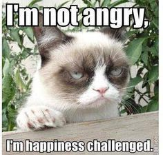 ...but i'm working on it!    [Grumpy Cat™ stuff, gifts, coupons, quotes, meme on www.pinterest.com/erikakaisersot]