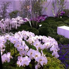 Orchids, orchids, orchids. outdoors