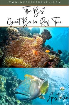 A blogger review on the best Great Barrier Reef tour from Cairns. Narrow down the limitless options for an epic reef snorkel or dive trip from Cairns— the doorstep of the Great Barrier Reef! A complete and honest scuba review by a certified Dive Master