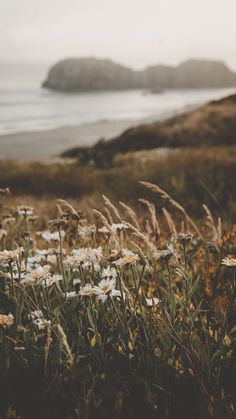 Blumen am Strand – schöne Hintergrundbilder – Flowers on the beach – beautiful wallpapers – # Aesthetic Backgrounds, Aesthetic Iphone Wallpaper, Nature Wallpaper, Aesthetic Wallpapers, Wallpaper Backgrounds, Beautiful Wallpaper, Beach Wallpaper, Strand Wallpaper, Screen Wallpaper
