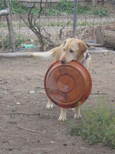 Hahahaha! This should protect me!! haha ~ lol now where did i put that bowl?