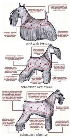 Arreglos de raza: scottish terrier, schnauzer miniatura y schnauzer gigante.
