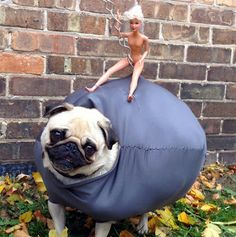 The Craftinomicon: Wrecking Ball Dog Costume