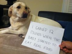Dog Shaming features the most hilarious, most shameful, and never-before-seen doggie misdeeds. Join us by sharing in the shaming and laughing as Dog Shaming reminds us that unconditional love goes both ways. Cute Animal Memes, Funny Animal Pictures, Funny Animals, Cute Animals, Animal Funnies, I Love Dogs, Puppy Love, Cute Dogs, Big Dogs