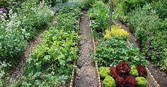 Längst haben Gemüsebeete ihr Schattendasein hinter sich gelassen. Der Küchengarten von heute präsentiert sich dekorativ und wird aus Lust am Gärtnern und Ernten angelegt. So erhalten Sie auch auf kleiner Fläche einen großen Ernteertrag.