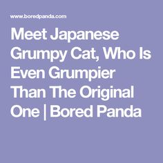 Meet Japanese Grumpy Cat, Who Is Even Grumpier Than The Original One | Bored Panda
