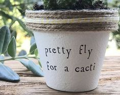 "2"" Pretty Fly for a Cacti » Plant Indoor and Outdoor Pot or Planter #IndoorGardening"