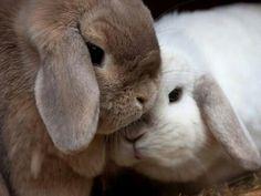 Cute Lops