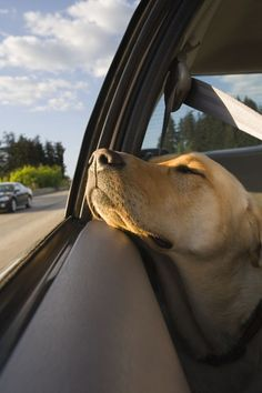 Huffington Post :: Traveling With Pets Tips: A How-To Guide On Vacations With Your Cat Or Dog.
