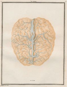 scientific sketch from century showing view of brain and blood supply Intaglio Printmaking, Scientific Drawing, Vintage Ephemera, Art Object, Altered Art, Art Images, Brain, Vintage World Maps, Photos