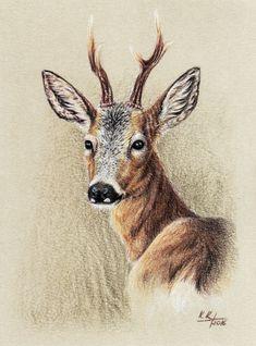 [CM] Roe Deer Buck #3 by Kwazar