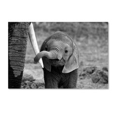 While e grateful for the many amazing rescue groups who are dedicated to rehabilitating and raising these orphaned little ones, this photo serves as a powerful reminder that none of that is the way it is supposed to be. Cute Baby Animals, Animals And Pets, Funny Animals, Exotic Animals, Jungle Animals, Wild Animals, Beautiful Creatures, Animals Beautiful, Baby Elefant