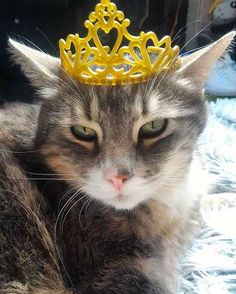 Cats can pull off tiaras wayyyyy better than humans