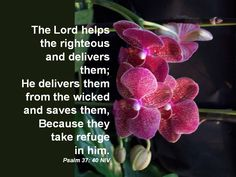 The Lord helps the righteous and delivers them;He delivers them from the wicked and saves them,Because they take refuge  in him.Psalm 37: 40 NIV