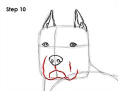 How To Draw a Pitbull, Step by Step, Pets, Animals, FREE