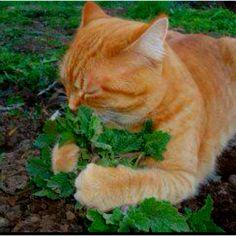 Catnip, I love you