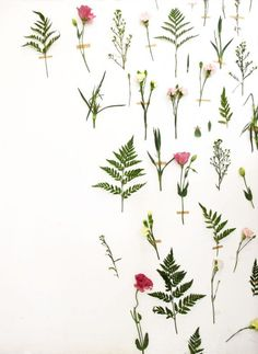 flower dreams shoot ++ skinny laminx