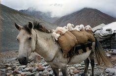 Climber & Explorer: Lahaul & Spiti, Himachal Pradesh, India