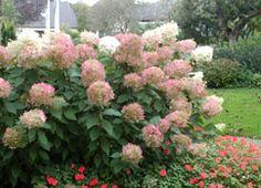 hortenzie Gardening, Plants, Green Plants, Lawn And Garden, Flowers, Garten, Planters, Garden, Plant