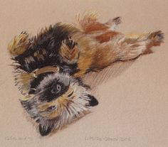 Upside-down Dog pastel drawing on paper by Cat Sutherland available as a limited edition print #cairn #terrier