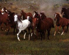British Columbia wild horses.